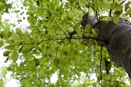 透き通る様な緑の葉