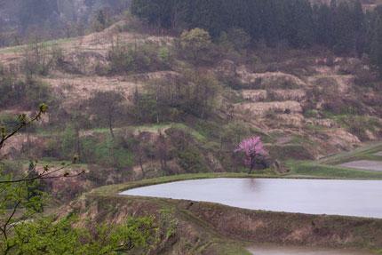 谷に見える綺麗な桃