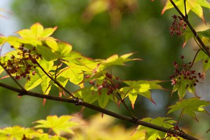新緑の5月上旬