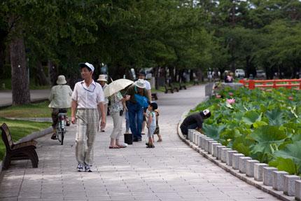 地元の人が散歩がてらにはすの花を見ている