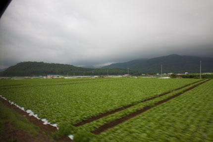 高原らしい、レタス畑が続きます