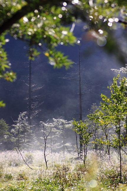 朝靄の残る樹海