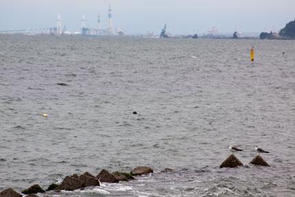 カモメと海と工場