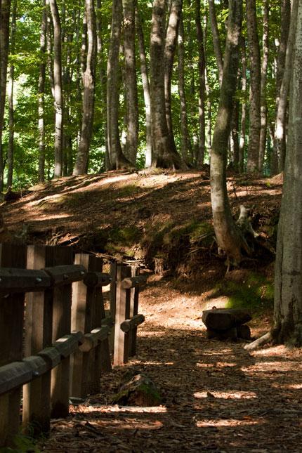 人工的な柵とベンチが美人林の景観にマッチしています