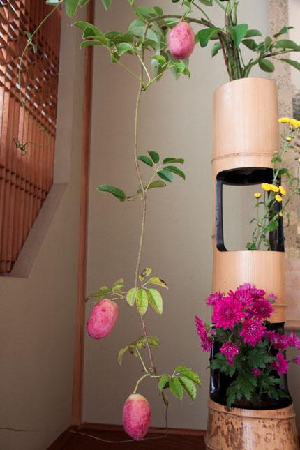 家の周りにある花を生ける