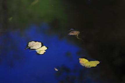 秋のひとかけら