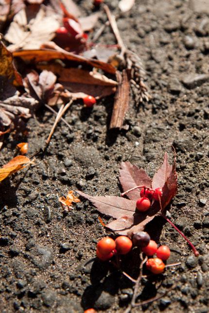 紅葉の残骸