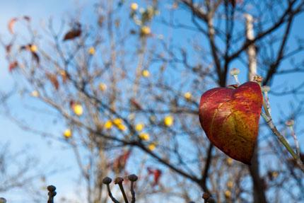 枝にしがみつく葉