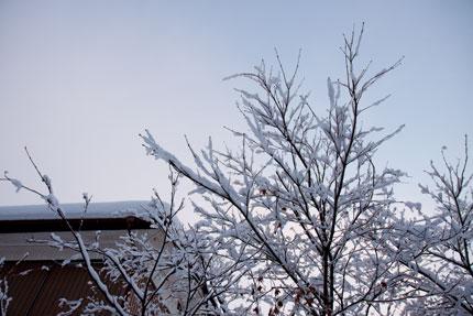 枝に乗る雪