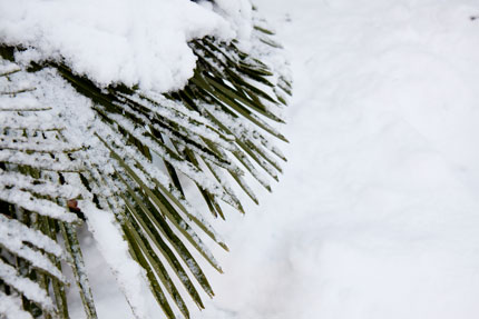 雪化粧始まる