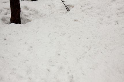 サクラと消えかけの雪