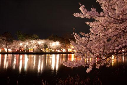 夜店の明かりの照らされる夜桜