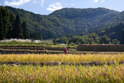 秋の恵みのお米
