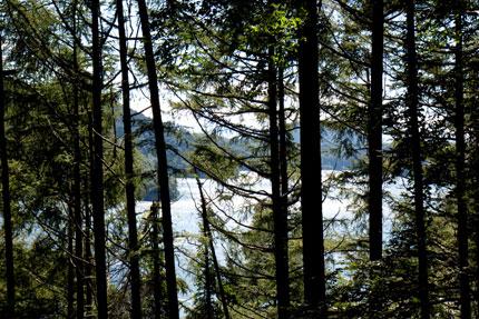 木々の間から見える野尻湖