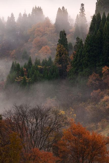 新潟の山の秋