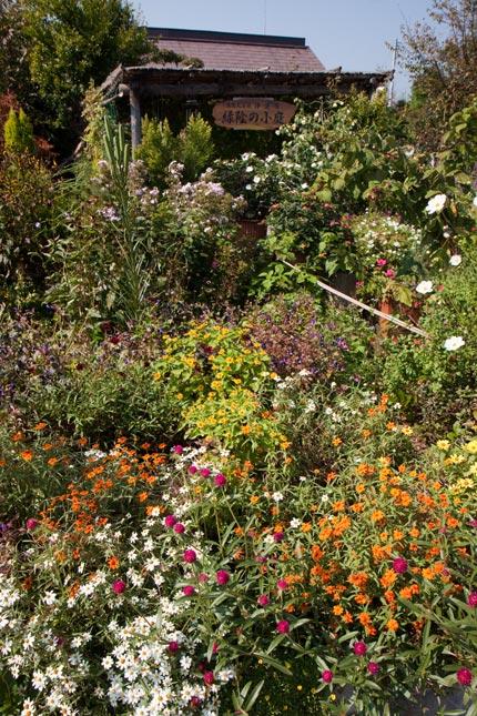 寺町通りにも参加されているお宅の庭