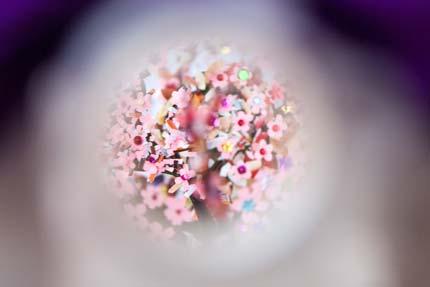 覗くと桜が咲いている