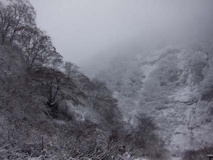 冬の始まりを感じさせる景色