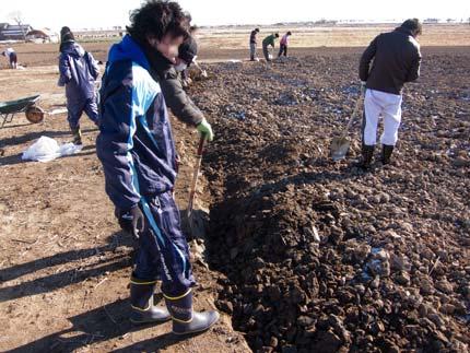土を掘り起こし