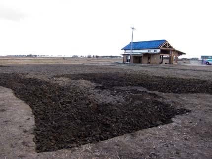 1日で私達が掘り起こした土地