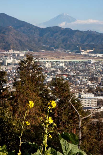 菜の花が咲きその先に富士山