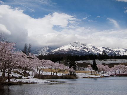 松ヶ峰の雪と染井吉野