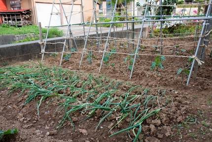 長ネギに茄子にトマト等