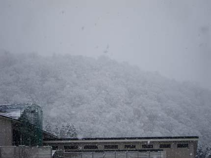 雪が積もっていました