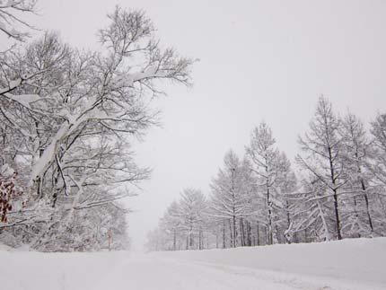 十分な積雪