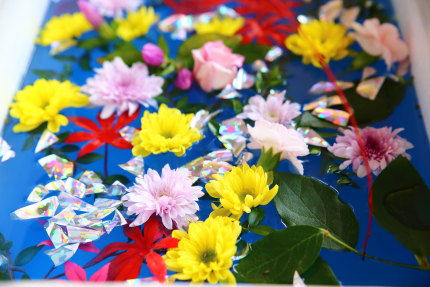水に浮かべた花々