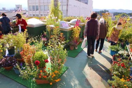 屋上いっぱいの花々