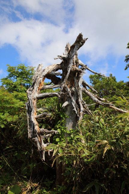 自然の厳しさを物語るような木