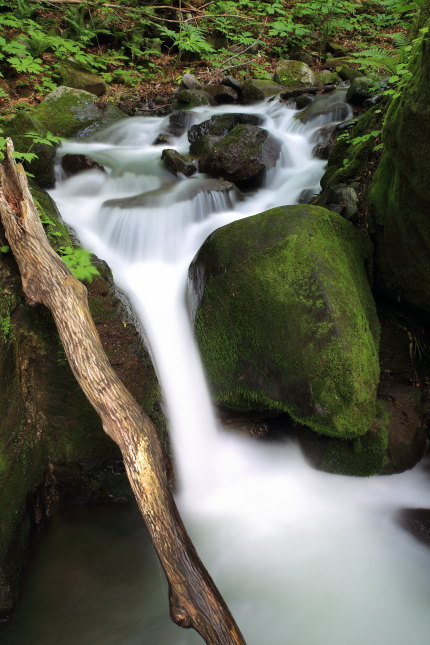 、奥入瀬渓流