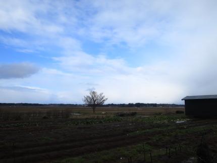 雪が無く青空の見える日