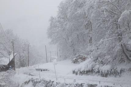 雪をまとったばかりの林