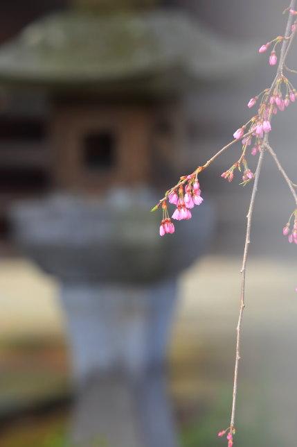 お寺の建物とのコンビネーション