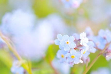 強くて長持ちする花