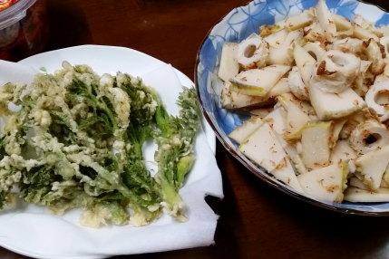タラの芽の天ぷら、竹輪と孟宗竹の煮物