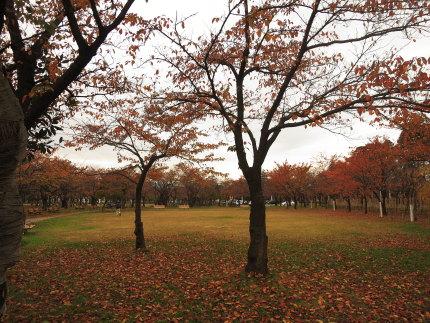 高田公園の紅葉