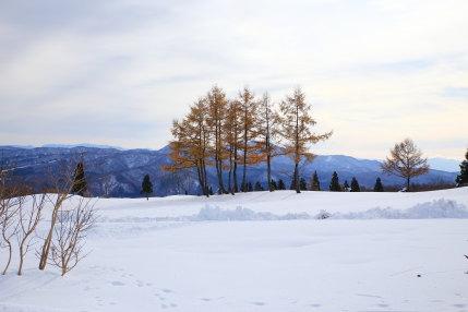 妙高カントリークラブの冬景色