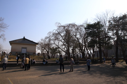 沢山の人が高田公園を訪れていました