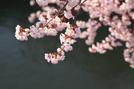 川と花のコントラスト