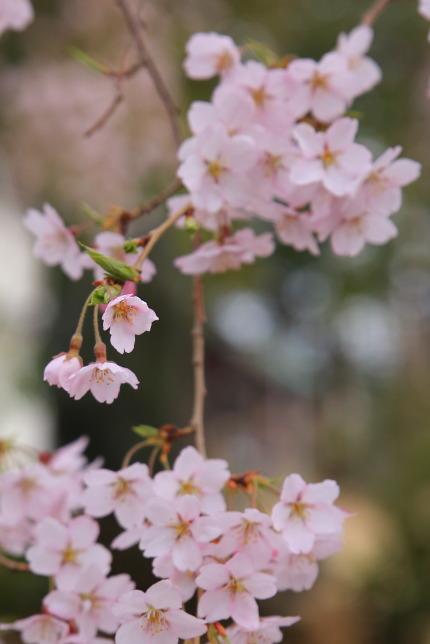 小さな花がたくさん咲いています