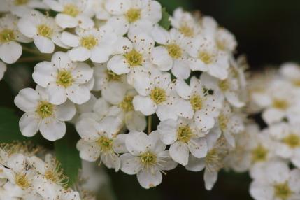 小さい花で可愛らしい