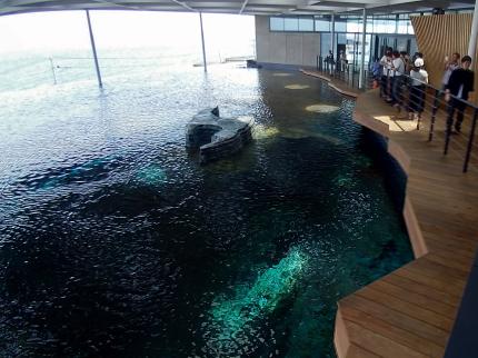 日本海も見えるうみがたり大水槽