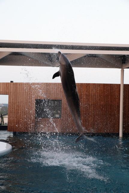 イルカたちが演技し出しました