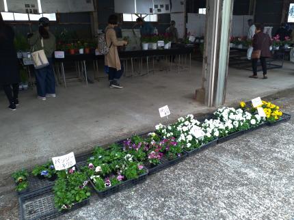栽培している花