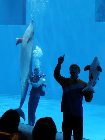 イルカの雄と雌の見分け方