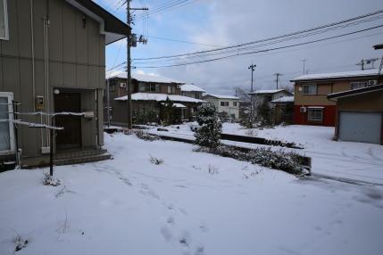 夜中に雪が降りました