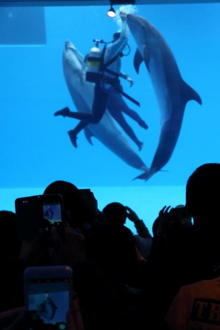 水中ドルフィンパフォーマンス「ART OF DOLPHIN」